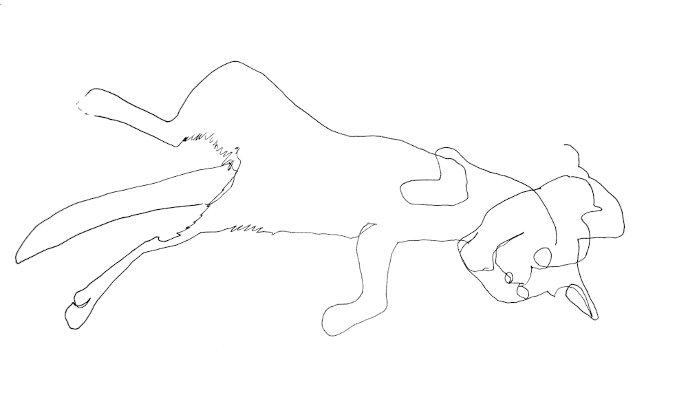Blind contour drawing of my cat